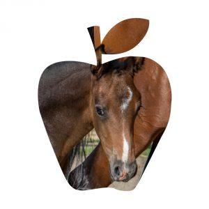 hdb-poulain-ultime-pomme